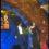 अवार्ड फंक्शन में दीपिका संग धीमे-धीमे थिरकते नजर आए कार्तिक , वायरल हुआ वीडियो